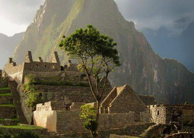 Lone Tree—Macchu Pichu, Peru, 2011