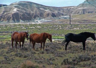Horses—Wyoming, 2012