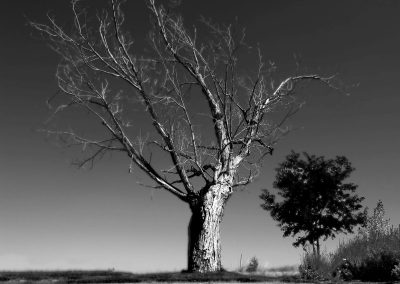 Dead tree that inspired my tattoo—Erie, Colorado, 2009