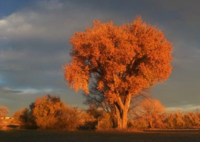 Autumn tree—Colorado, 2012