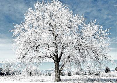 Tree frost, Colorado, 2019